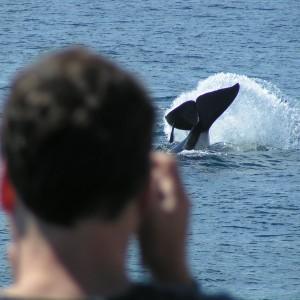 San Juan Islands Killer Whale Ethology