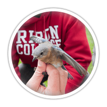 small, gray bird sitting on top of a human hand