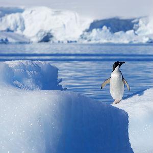 penguin on ice burg