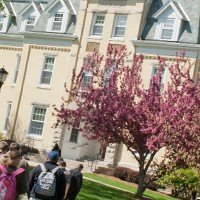 campus building with pink flowering tree
