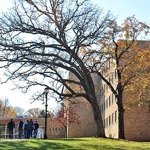 brick building behind bare tree