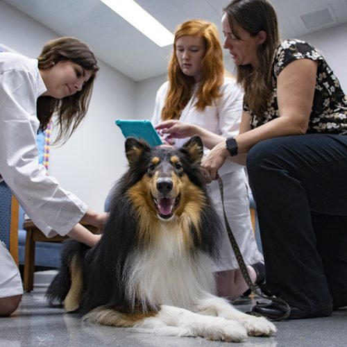 Julia Meyers-Manor and students in lab with dog